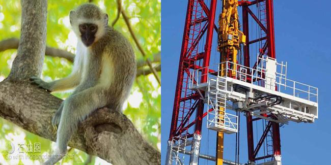 """石油业""""行话""""大盘点 大半个动物园都被咱们承包了!"""
