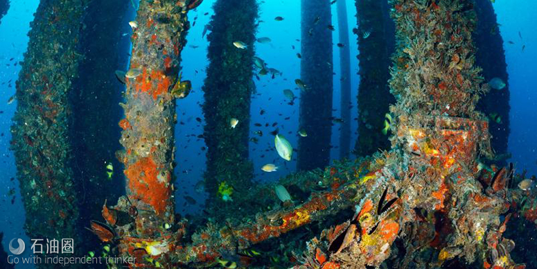 废弃海洋设备摇身变为海洋生物新家园